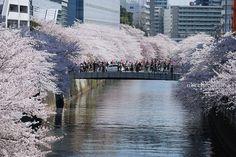 150402_tokyo_14.jpg (650×433)
