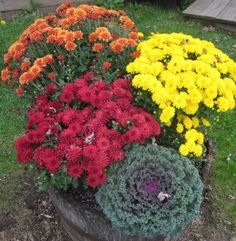 How to decorate your home with chrysanthemums.  Slide show.