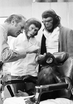 A real chimp, Kelly, is getting a human-style plastic nose for his role in Escape from the Planet of the Apes because his nose is flatter than the actors in ape makeup. A film technician, left, applies the nose while actors Kim Hunter and Roddy McDowell look on in Hollywood on Jan. 20, 1971.