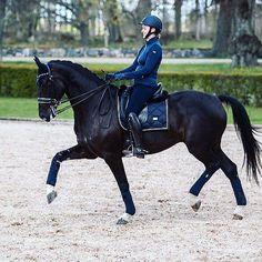 #equestrian #equestrianstockholm #horse #horses #equestrianperformance