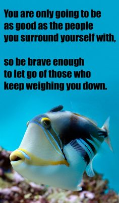Take some advice from one smart fish. Be brave.  #createamixer https://createamixer.com