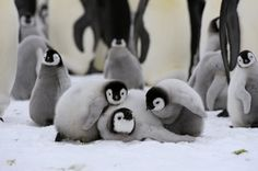 Playful Penguins!!!