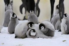 Playful Penguins!!!