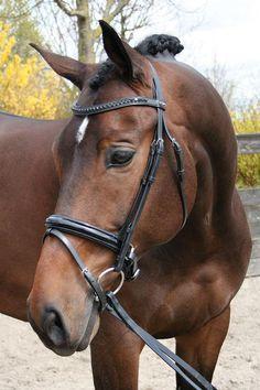 Hoofdstel Lak - 28002160 - Harry's Horse