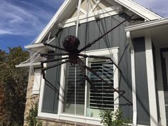 Giant Spider decoration, neighborhood kid nightmares! Made w/PVC pipe, insulators, a yoga ball, an aluminum serving tray (body), and lots of Great Stuff spray insulation