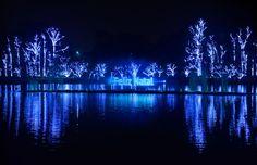 Ibirapuera apresenta luzes e projeções de Natal