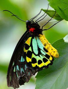 ~Butterfly~