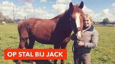 Op stal bij Jack | PaardenpraatTV - YouTube