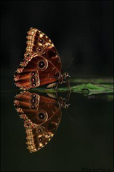 Kann es sein, dass du keine Schmetterling magst, da du zu viel Teen Wolf gesehen hast? :D