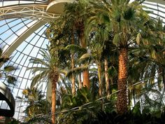Indoor Palm Trees                                                                                                                                                      More