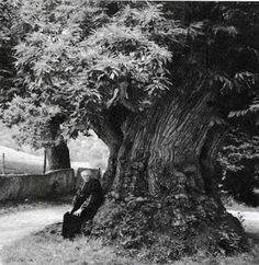 """Tempo di castagne. Ma quando comparse per la prima volta il castagno in Garfagnana? Il Pascoli lo definì """"l'albero del pane"""",leggenda vuole però che fu Dio a mandarlo nelle nostre terre per compensare i doni che aveva distribuito in altri posti:l'olivo in Versilia e la vite nelle colline lucchesi. Al povero garfagnino non era rimasto altro, finchè un giorno tutto ebbe inizio...Bellissimo, raro e antico racconto questo, le prime notizie scritte su di esso si ritrovano riportate nel 1720."""