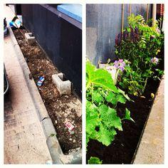 Geveltuin in Amsterdam Amsterdam, Yard Ideas, Aquarium, Garden, Plants, Goldfish Bowl, Patio Ideas, Garten, Courtyard Ideas