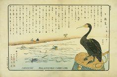 360-16 多摩川鵜飼図  中島仰山画・田中芳男記  1枚 明治9年(1876)10月 25.1×37.2