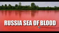 .. SEA TURN TO BLOOD .. RUSSIA, a SIGN of Coming CATACLYSM Aug. 7, 2012 ...(video) Revelation Bible, New King James Version, Getting Fired, New World Order, Conspiracy Theories, Wild Animals, Pay Attention, Rivers, Turning