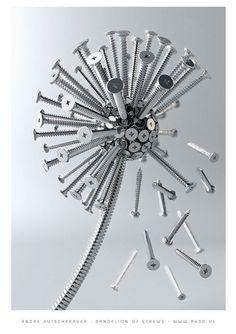 Dandelion of screws by Andre Kutsche  [dandelion, Taraxacum officinale, Asteraceae]