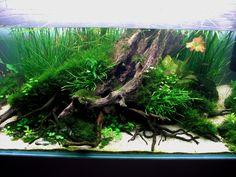 Mervent par Poups. Love the root driftwood structure