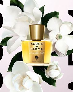 Google Image Result for http://www.sniffapaloozamagazine.com/aqua_de_parma_magnolis.jpg