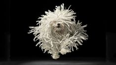Tim Flach-photographer. The highlight (that you're taken to if you click the picture) has a link to his webpage. His whole portfolio is wonderful.