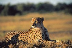 African Safaris for Families - Family Vacation Critic - Family ...