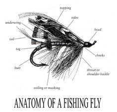 anatomy of a fishing fly, tying flies should calm my brain, maybe or not...