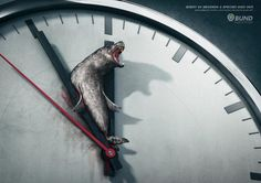 Every 60 seconds a species dies out, Each minute counts. Each donation helps.