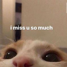 Memes Amor, Memes Estúpidos, Funny Memes, Comedy Memes, Cute Cat Memes, Cute Love Memes, Cartoon Jokes, All Meme, Stupid Memes