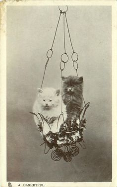 Cats in Art, Illustration, Photography, Decorative Arts, Textiles, Needlework and Design:
