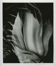 Edward Weston | Chinese Cabbage (1931) | Available for Sale | Artsy