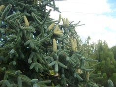 Wspaniały drzewostan w ogrodach hortulus, więcej na http://skuterowewyprawy.eu/ogrody-tematyczne-hortulus