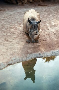 Rhiono (by Anastasia Kruten) Cute Creatures, Beautiful Creatures, Animals Are Beautiful People, Save The Rhino, Rhinoceros, Wildlife Nature, African Animals, Wild Ones, Cute Funny Animals