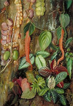 Group of Bornean Plants Location: Borneo, Marianne North Botanical Illustration, Botanical Prints, Beautiful Paintings Of Flowers, Marianne North, Kew Gardens, Typography Prints, Large Art, Art Reproductions, Botany