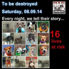 TO BE DESTROYED - 08/09/14 PITTIES ARE IN DANGER AGAIN. THERE ARE FAR TOO MANY TODAY!!! ALL THESE DOGS COUNT ON US!!! LET'S NOT LET THEM DOWN!!! PLEASE OPEN YOUR HEARTS AND PLEDGE, TAKE THEM HOME, BUT BE QUICK AS TIME IS TICKING AWAY. PLEASE BE QUICK WHEN MAKING UP YOUR MIND!!   https://www.facebook.com/media/set/?set=a.611290788883804.1073741851.152876678058553&type=3