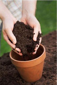 Garden Tip: Good Soil for Beautiful Gardens