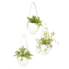 I bought these white hanging planters with leather straps on #fab