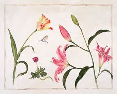 Gertrude Hamilton Limited Edition Botanical Print - Tiger Flower Studio