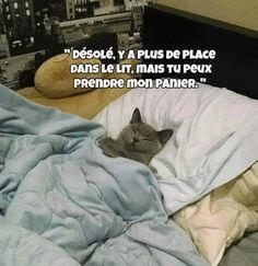 Désolé y a plus de #place dans le #lit mais tu peux #prendre mon #panier !!! #blague #drôle #drole #humour #mdr #lol #vdm #rire #rigolo #rigolade #rigole #rigoler #blagues #humours Animal Drawings, Drawing Animals, Here Kitty Kitty, Cute Animals, Animals And Pets, Cats, Jelly Beans, Softies, Humour