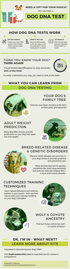Why a dog DNA test is the best present your dog could get for Christmas!