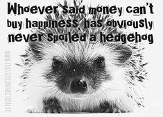A Hedgehog, Connection, Jokes, Lol, Humor, Sayings, Funny, Movie Posters, Husky Jokes