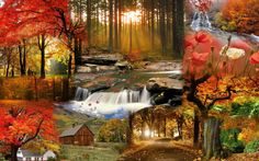 499 Best Fall Scenes Images Fall Autumn Scenery Autumn