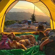 dog, camping, and nature image