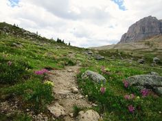 Hiking in the Alberta Rockies