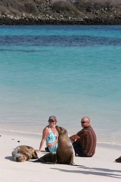 Sea Lions and Guests relaxing on the white sandy beach in the Galapagos Islands