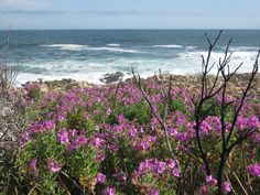 Kleinmond South Africa: new life after the veld fires