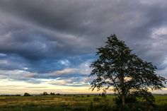 Lonely Tree. August 2014, iPhone