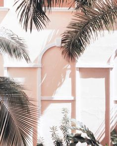 Palm tree paradise via can find Palm trees and more on our website.Palm tree paradise via Beach Aesthetic, Summer Aesthetic, Aesthetic Photo, Pink Aesthetic, Aesthetic Pictures, Photo Wall Collage, Picture Wall, Images Murales, Cute Wallpapers