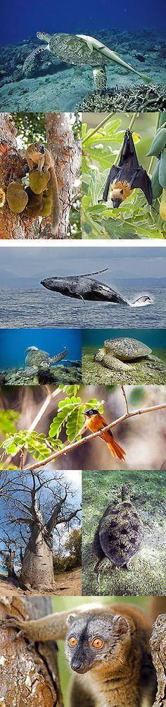 Photographies nature : Mayotte : Le jardin des tortues - Gérard Soury, photographe et écrivain de la nature. Photographe sous-marin, photographe animalier.