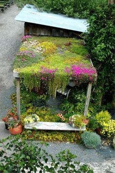 Amazing green roof / Magic Garden  <3