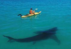 Sea kayak with company