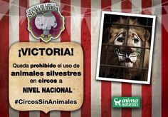 Queda prohibido el uso de animales silvestres en circos a nivel nacional en México http://www.milenio.com/politica/circo_sin_animales-mexico_aprueba_circos_sin_animales-no_al_maltrato_animal_0_425357690.html?utm_source=Twitter&utm_medium=Referral&utm_term=Politica&utm_campaign=Mileniotv