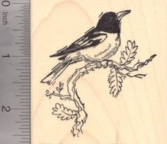 New World Oriole Bird Rubber Stamp Baltimore Oriole *** See this great product.